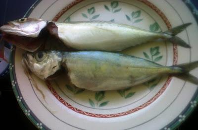 Ikan Tude