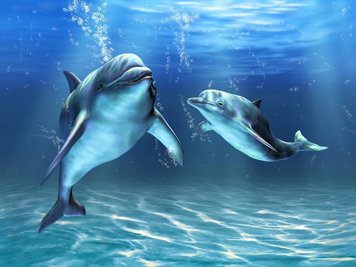Ajaib, Ternyata Lumba-lumba Bisa Mengobati Dirinya Sendiri