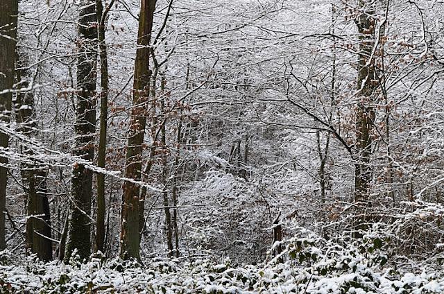 Arbre neige Yonne Puisaye