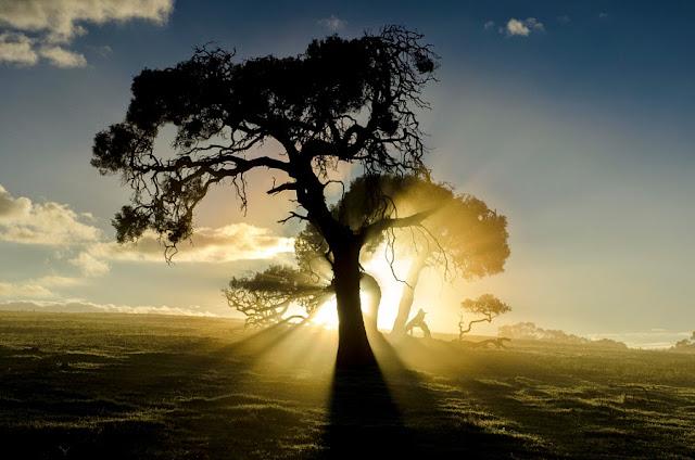 تصوير شروق الشمس
