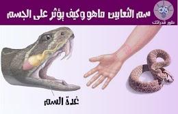 سم الثعابين ماهو وكيف يؤثر على الجسم