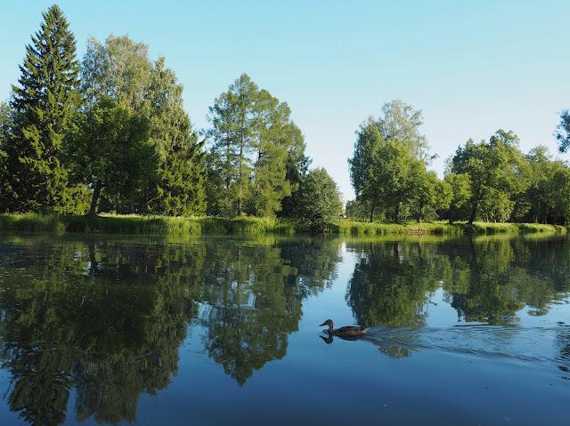 Парк в Павловске – Вокзальный пруд (Park in Pavlovsk - Vokzalny Pond)