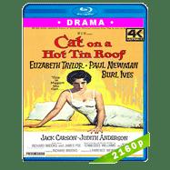 La gata sobre el tejado de zinc (1958) 4K Audio Trial Latino-Ingles-Castellano