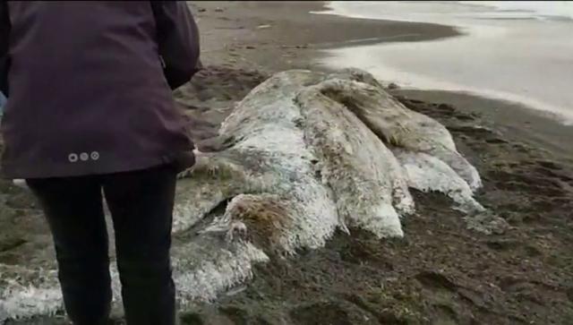 Hallan extraña criatura en una playa en Rusia