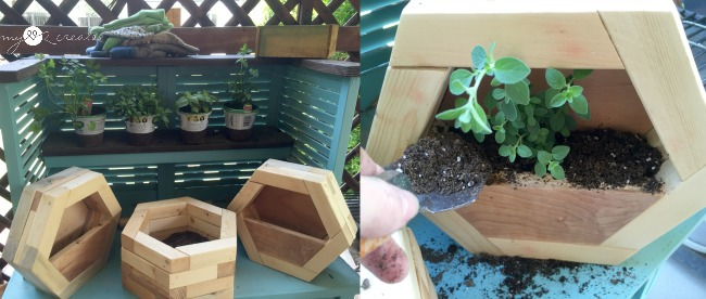 planting herbs in hexagon planters