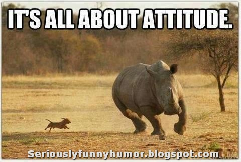 It's all about attitude, BITCH! :D ;) Puppy chasing rhino funny photo