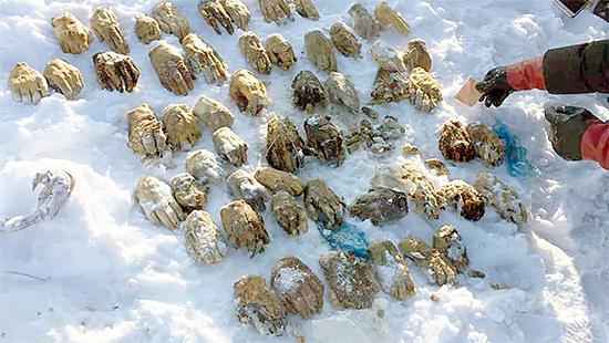 Mistério das 54 mãos decepadas encontradas na Rússia foi finalmente resolvido - Img 1