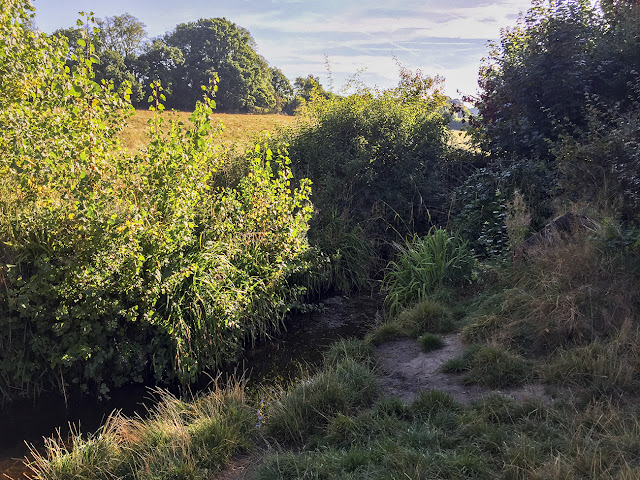 The Kyd Brook.  Walk round the Hawkwood Estate 06, 30 August 2016.
