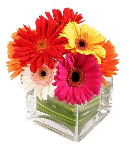 Gerbera Daisy Arrangements Vases: Canada Floral Delivery Blog: A Few Facts About Gerbera Daisies