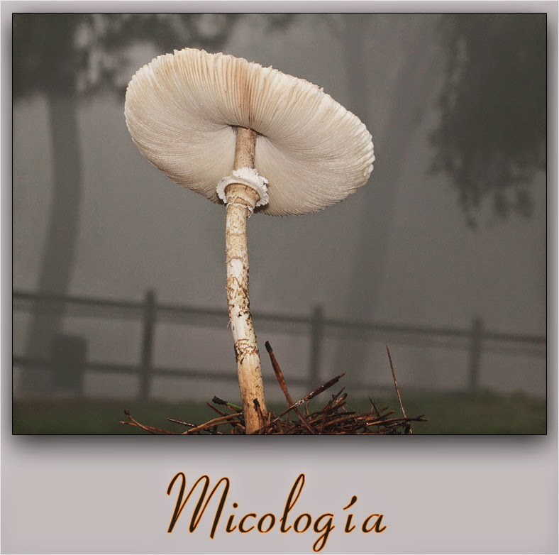 Micología