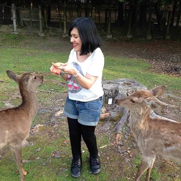 rencontre avec les cerfs à Nara au Japon