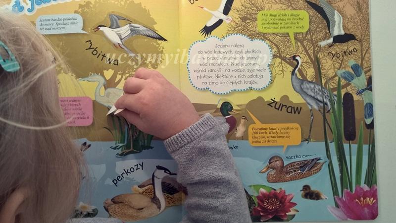 Montessori - karty pracy ze zwierzętami
