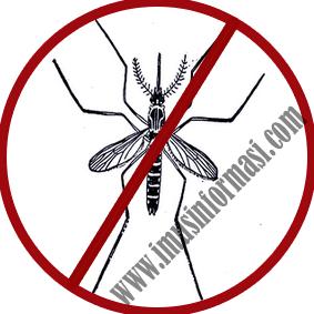 Cara Ampuh Mengusir Nyamuk Tanpa Bahan Kimia