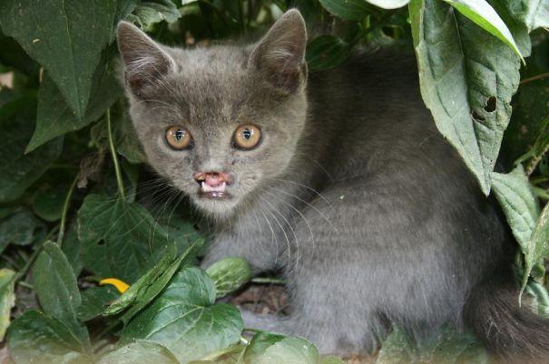 Lazarus, The Rescued Vampire Cat-1