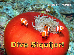 Dive Siquijor - Click on Image for Details: