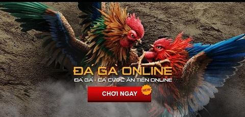 Cách hoạt động những trang cá cược đá gà online