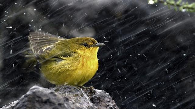 Βροχή στα έλατα αυτή την ώρα