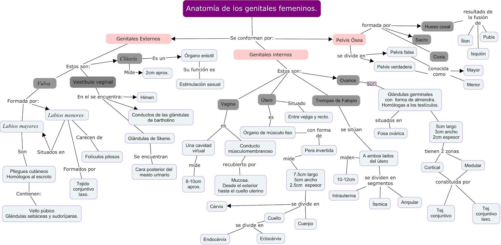 Ginecología y Obstetricia 2016 por Carmen Elena Chavez G. : Anatomía ...