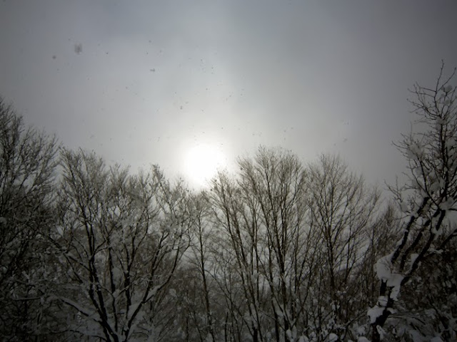 林の向こうに太陽