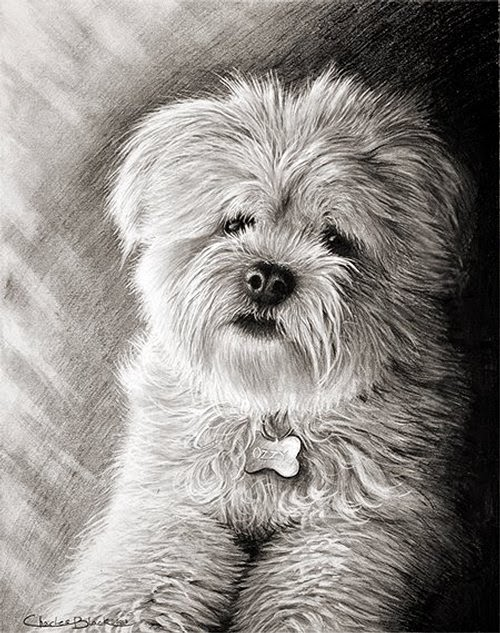 07-Charles-Black-Hyper-Realistic-Pencil-Drawings-of-Dogs-www-designstack-co