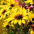 Belgharia Flowers Mela - 1