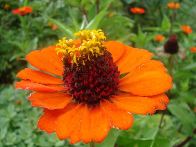 Moça velha laranja