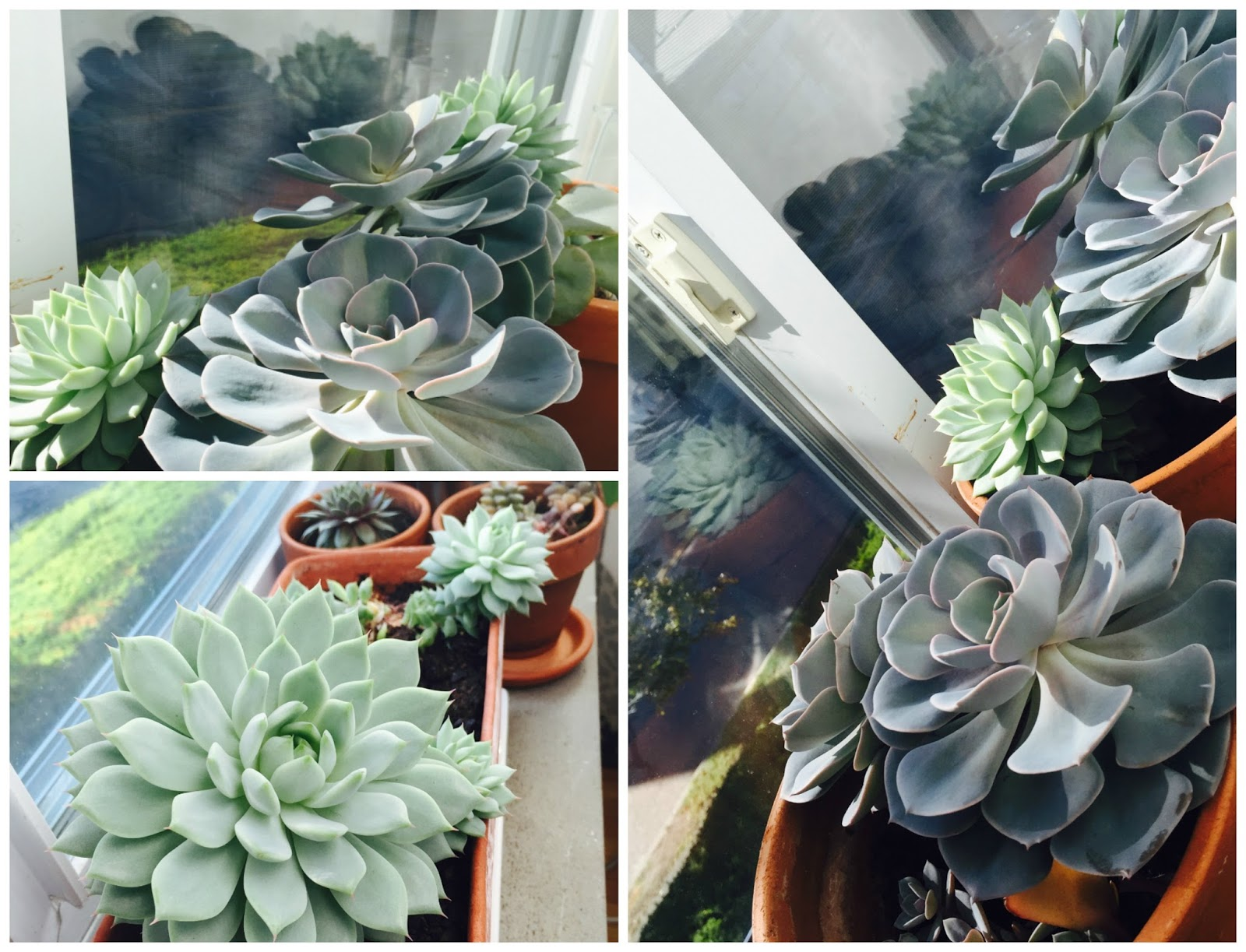planting wedding succulents