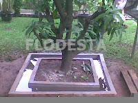 Ternak Kroto di Pohon