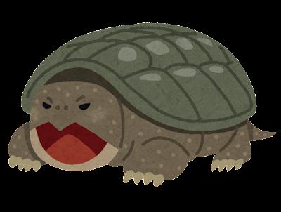 カミツキガメのイラスト