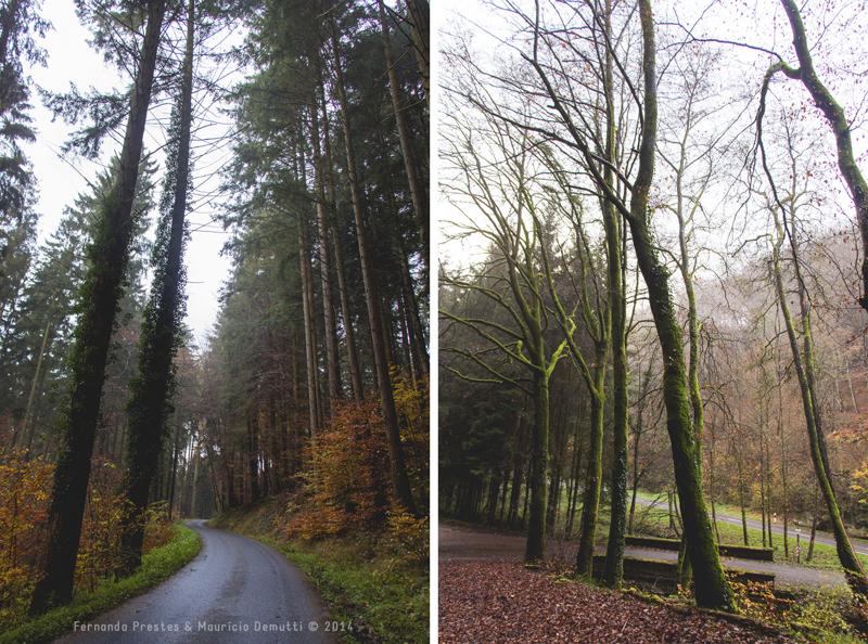 mullerthal trail Luxemburgo