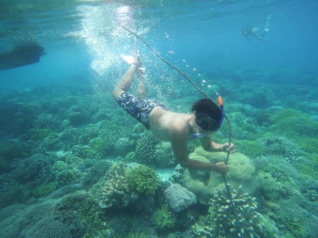 Keindahan Bawah Laut Pulau Mahoro