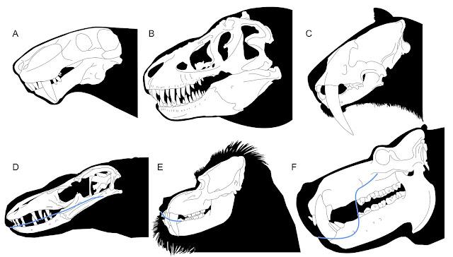 A Inostrancevia Latifrons B Tyrannosaurus Rex C Smilodon Fatalis D Crocodile Monitor