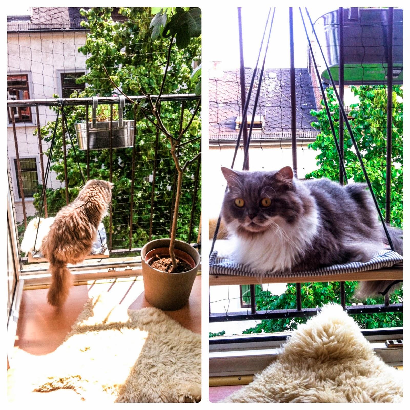 dicke w goldmarie sonne fruhling und ein vor With französischer balkon mit katzen im garten fernhalten