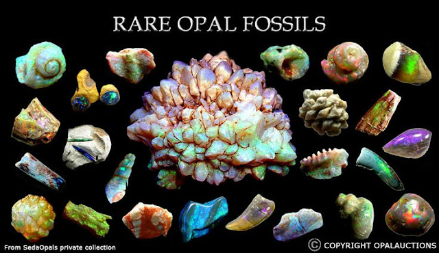 How Do Opalised Fossils Form