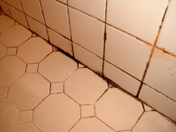 Handypro handyman services how do you get rid of black - How to get rid of surface mold in bathroom ...