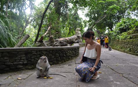 Tempat wisata monkey forest di bali