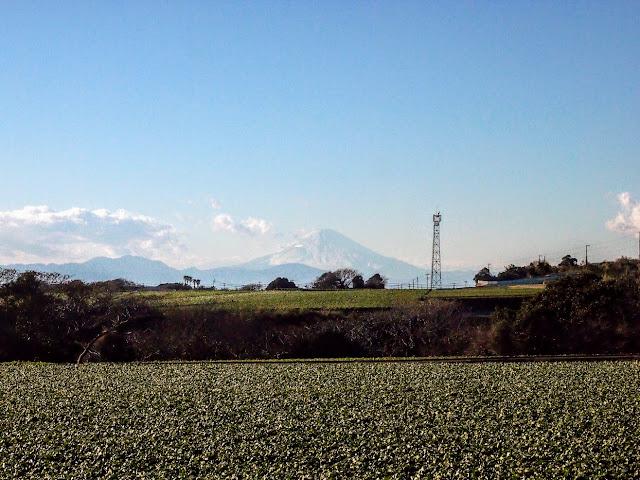 宮川公園 風車 大根 富士山