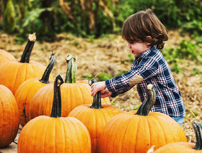 pumpkin picking | fall activities