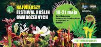 rośliny owadożerne, roraima, ogród botaniczny w Krakowie