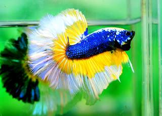 Ikan Hidupan Bernilai Dalam Air