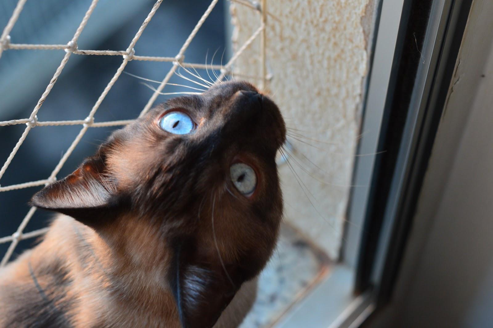 Projeto fotográfico 7 on 7: Gatos fofinhos