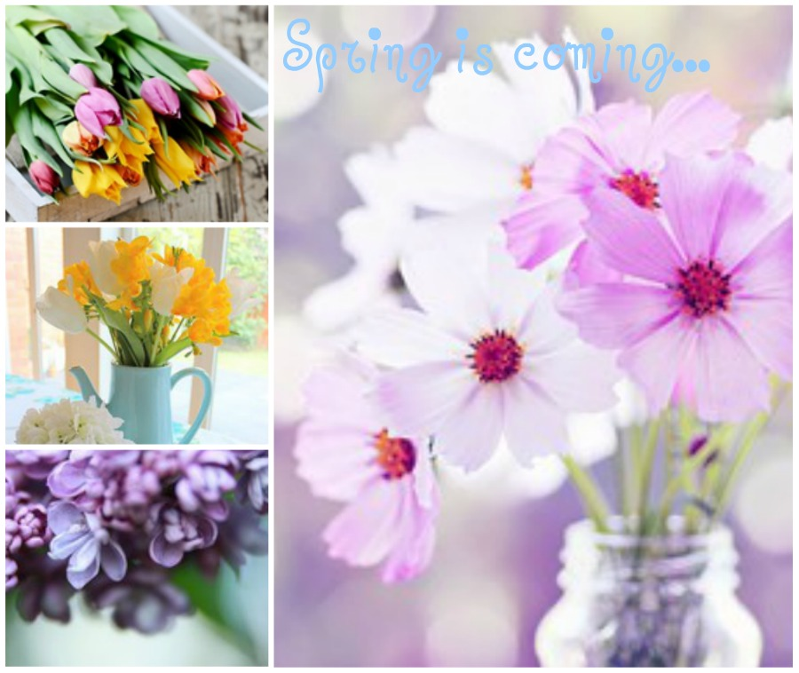 Winter Blues to Spring Flowers