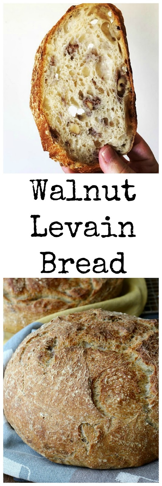 This Walnut Levain Bread is such a pleasure to make, and even more fun to eat. The crust is chewy, and the crumb is soft and airy, and loaded with toasted walnuts.
