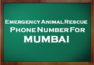 Animal Rescue Number Mumbai