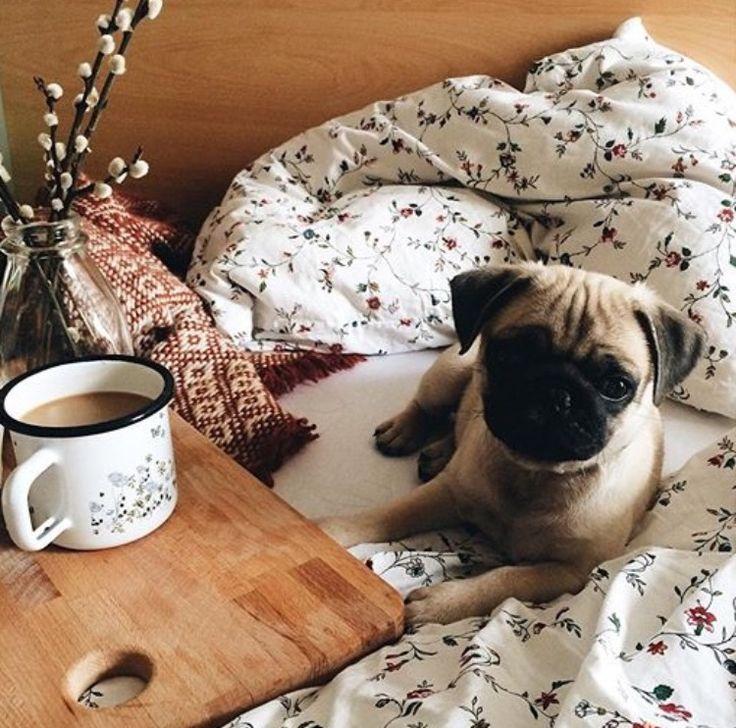 Доброе утро смешные картинки с собаками