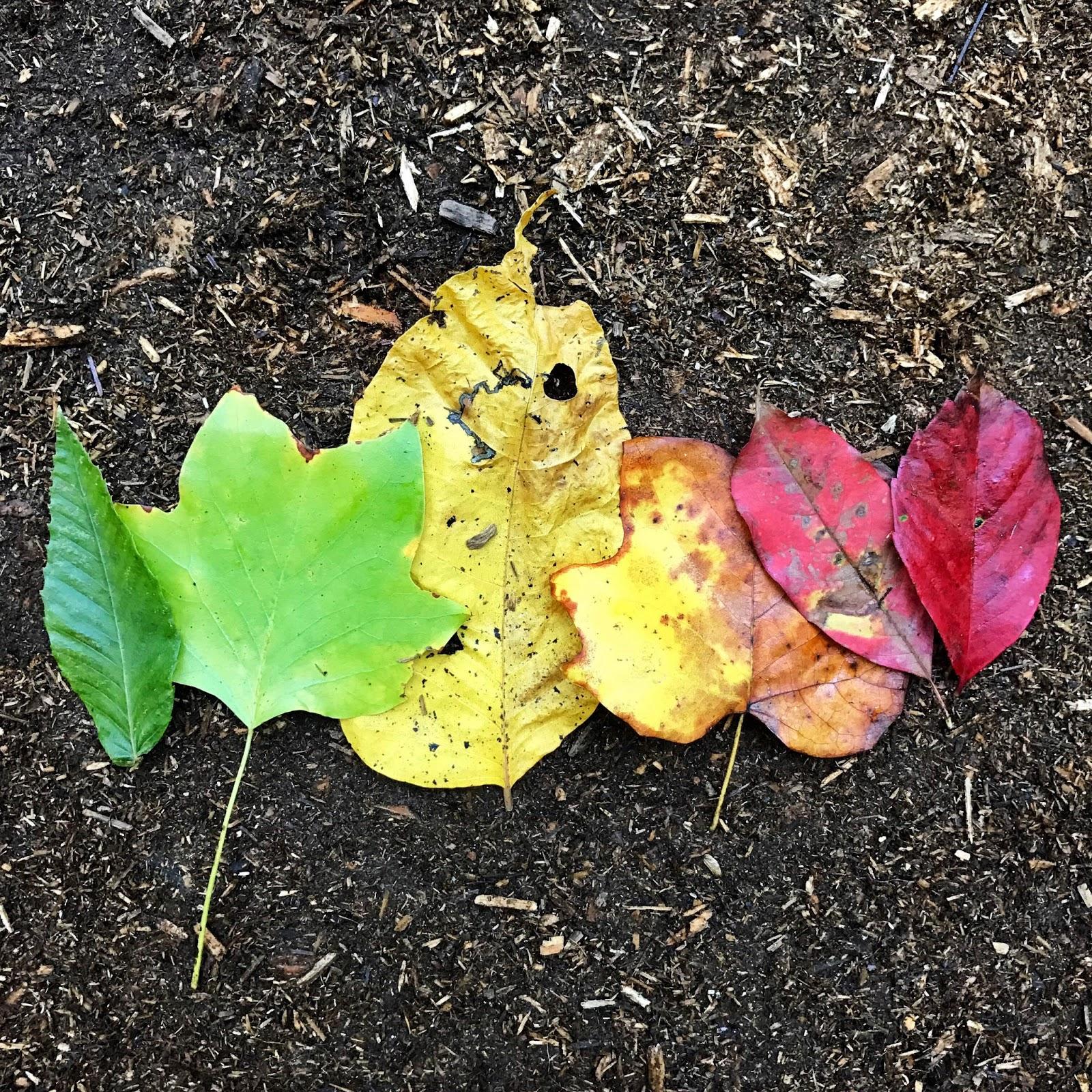 Love Joleen Preschool Theme Leaves