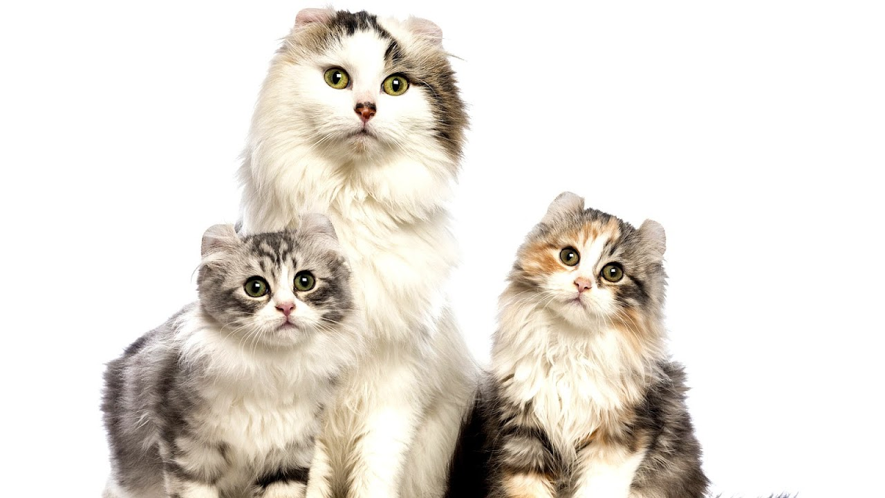 Cute Cats Names Female Cute Choices