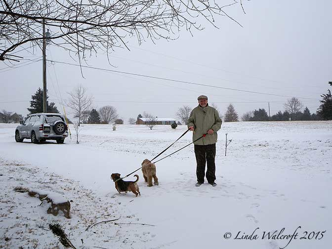 man walking dogs