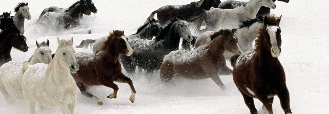 Horse- Spirit Animal