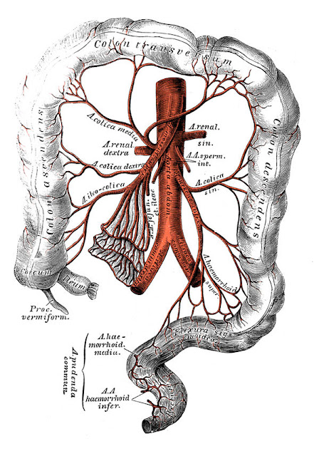 The mesentery used to be classified as a single structure